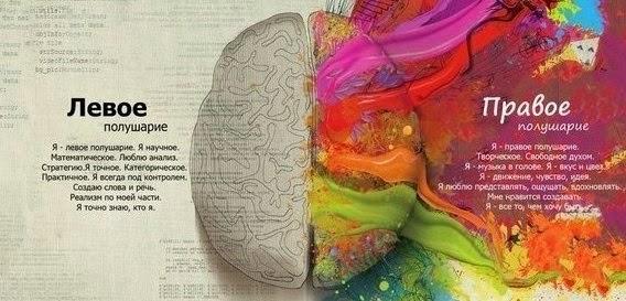 человеческий мозг левое и правое полушария