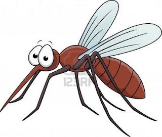 Ini Lho Beda Gejala Infeksi Virus Zika dan DBD