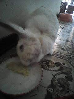 alimentazione coniglio, coniglio malato,