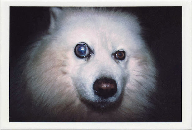 dirty photos - noah's ark fauna photo of dog with sick eye
