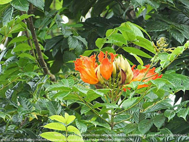 Flowers in lowland of West Papua's rainforest