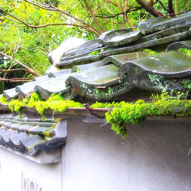 軒樋に苔が付き、盛り出るこぼれる緑の苔