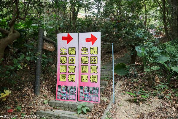 彰化福田賞桐生態園區客家桐花祭,賞桐步道搭配裝置藝術好好拍