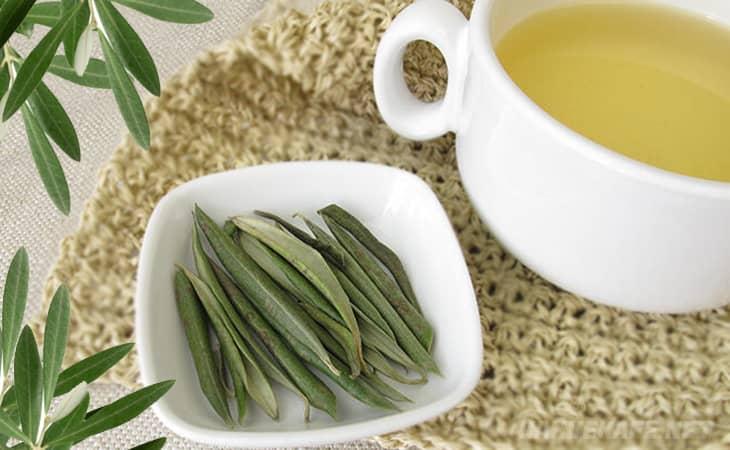 zeytin yaprağı çayının faydaları nelerdir, zeytin yaprağı çayı ne işe yarıyor - www.kahvekafe.net