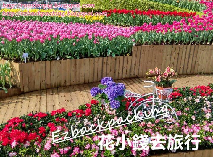 香港花展2021:中環鬱金香