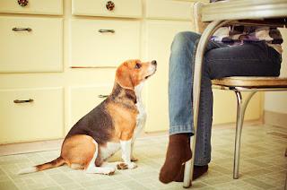 cães apartamento