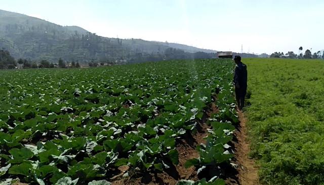 petani adalah Primadona Yang Terabaikan Di Situ Cisanti