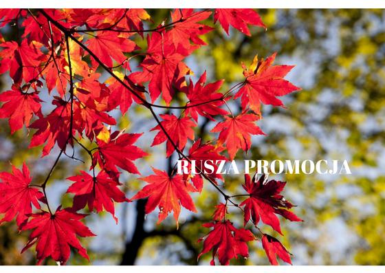 Promocja w Rossmannie (10-19 października)