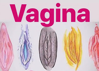 7 types of vagina and how they can be enjoyed