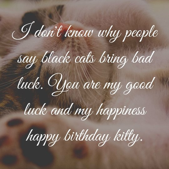 Cute Birthday Wishes for Cats