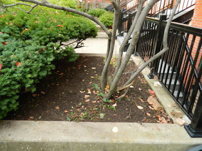 Downtown Toronto Fall Cleanup After by Paul Jung Gardening Services--a Toronto Organic Gardener