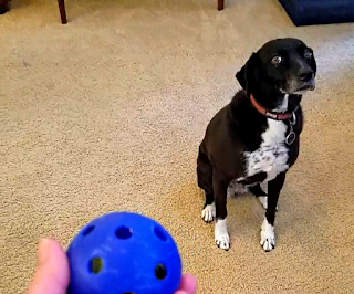 dog won't play with ball and won't play fetch