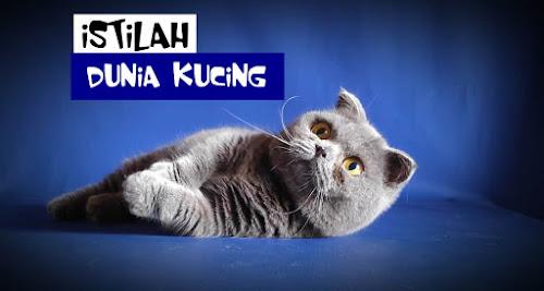 Dunia Kucing