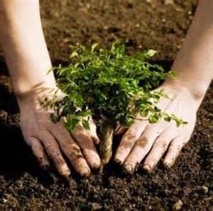 importance of afforestation
