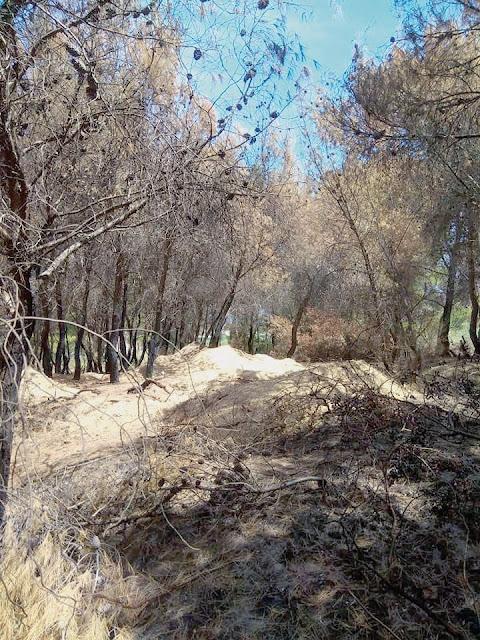 Γεράνεια Όρη: Η καταστροφική φωτιά αποκάλυψε λαθρανασκαφή!