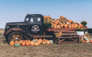 a vintage black truck is piled with pumpkins, and has the Mazing Acres logo on its front door