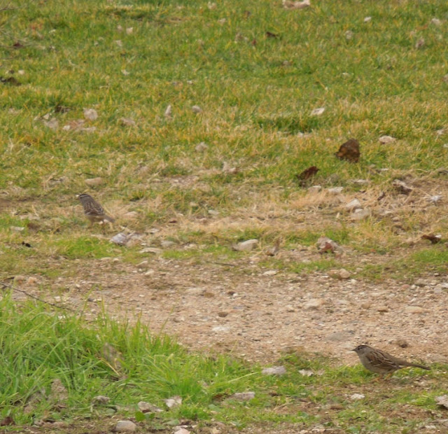 """""""Larry"""" Moore Park in Paso Robles: A Photographic Review - Birds"""
