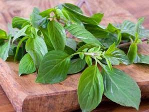 basil leaves health benefits