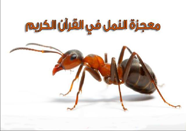 النملة التى علمت الاف البشر حكمة لا تنسى