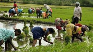 PMKMY gives Pension to Farmers above 60 to Get Rs 3,000 per Month