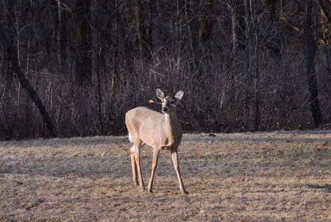 Strange Facts: Hunter's Arrow Hit Deer Head