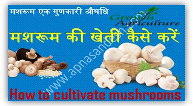 मशरूम की खेती कैसे करें - How to cultivate mushrooms