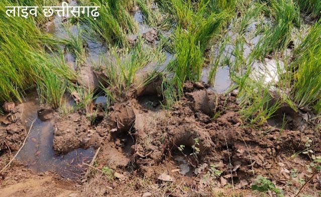 chhattisgarh news live