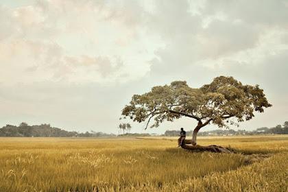 Pohon Pengantin Salatiga: Pohon Unik Kesepian