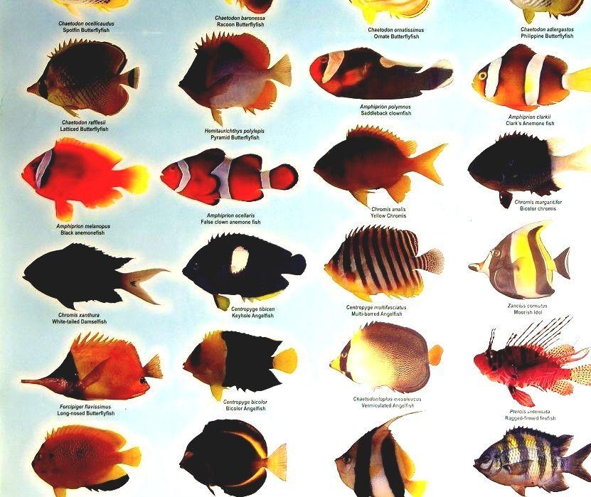 List Of Freshwater Aquarium Fish Species - Acquarium Fish