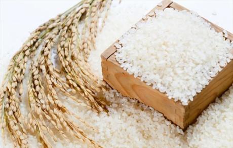 Giá gạo thế giới dự báo tiếp tục tăng mạnh