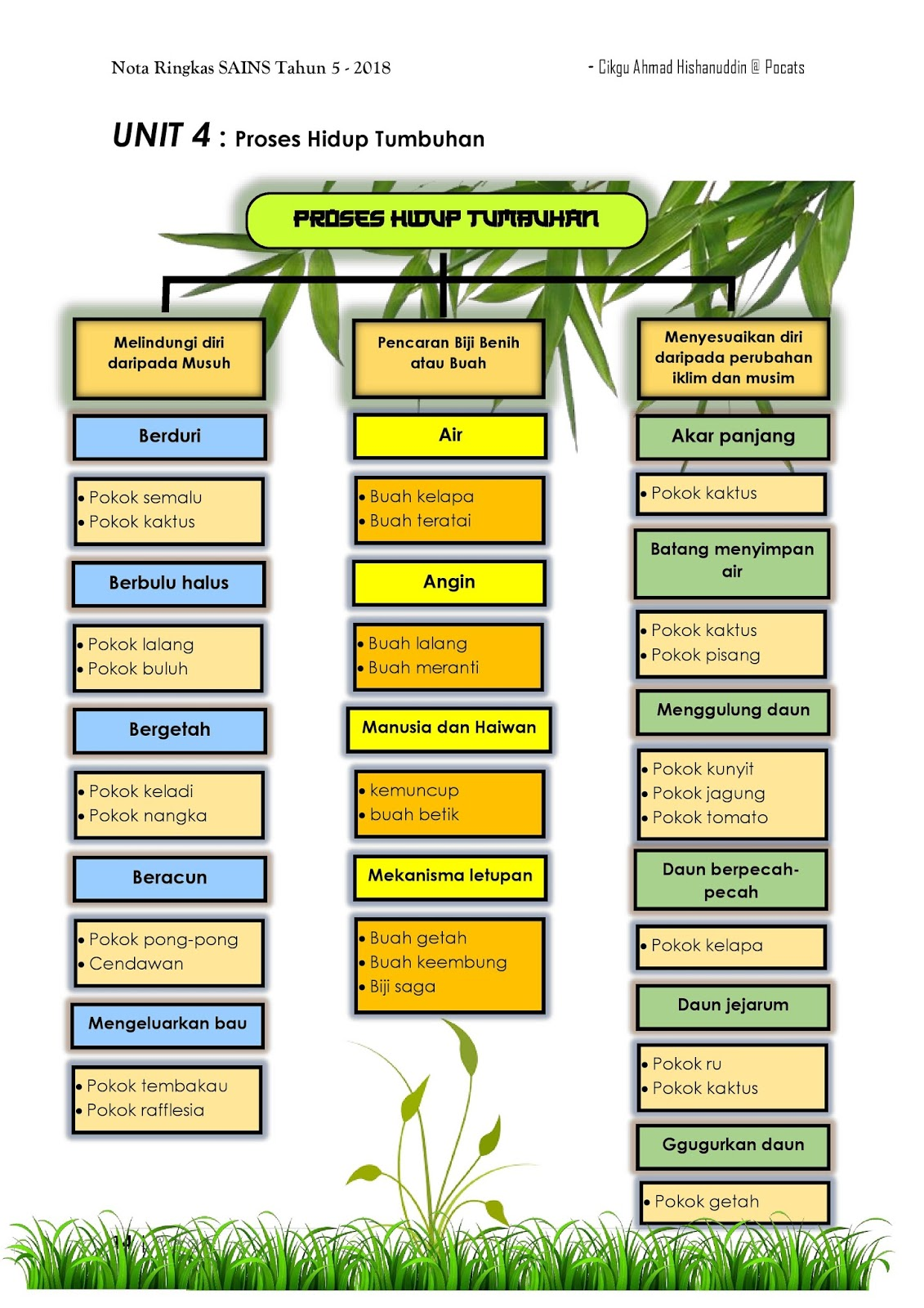 Notasains T5 Proses Hidup Tumbuhan
