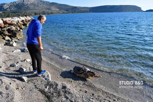 Νεκρή θαλάσσια χελώνα στην παραλία Καραθώνας στο Ναύπλιο (βίντεο)