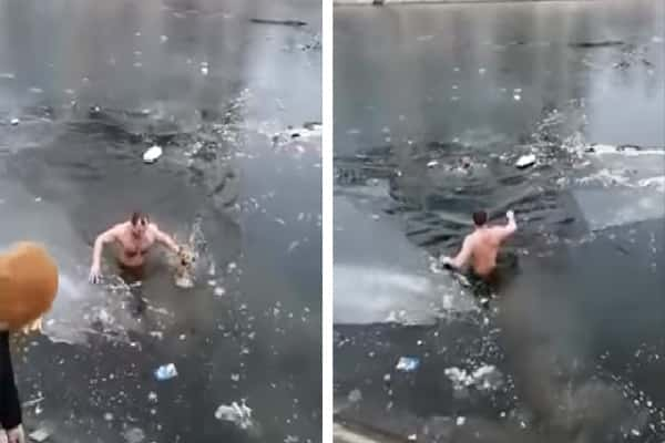 A Man He Tosses Himself Into The Cold Water To Conserve A Dog