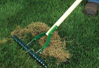 how to dethatch centipede grass