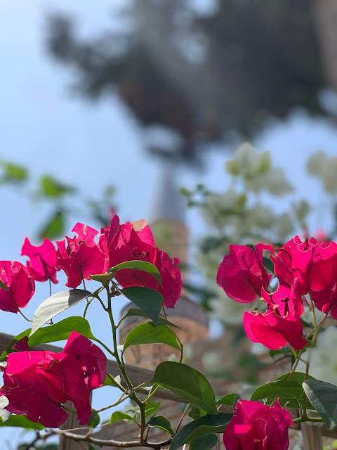 Limassol Grand Mosque seen through flowers