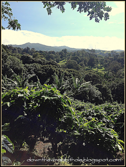 coffee tour Costa Rica