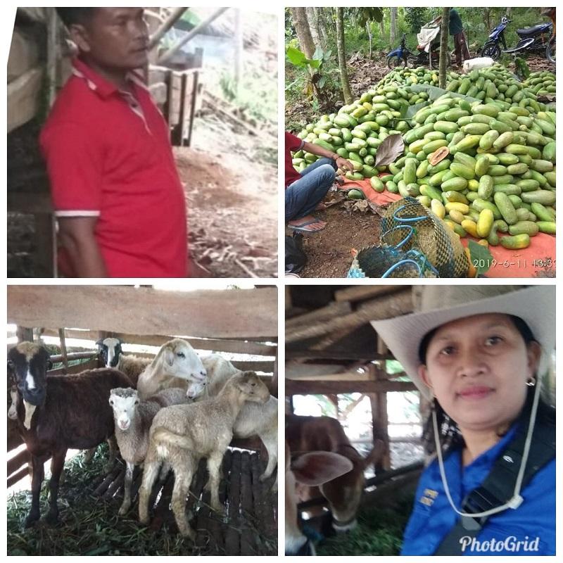 Poktan Sinar Jaya, Kel. Urug  Dijadiken Percontohan
