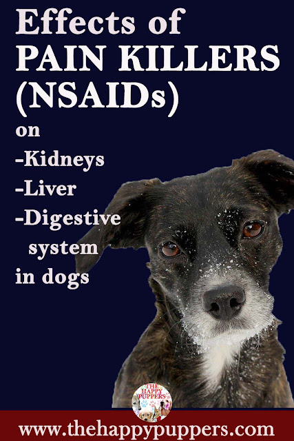 Effects of NSAIDs on dogs