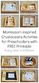 Montessori-inspired Crustaceans Activities for Preschoolers with FREE Printable