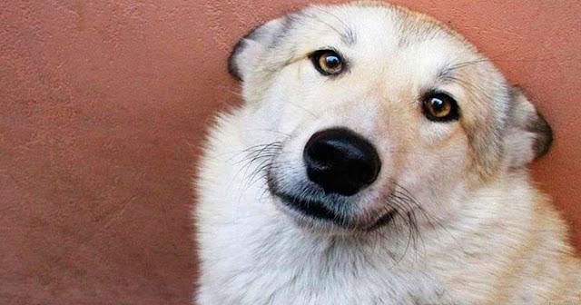 Собака 2 дня грела мальчика, которого мама бросила умирать на морозе…