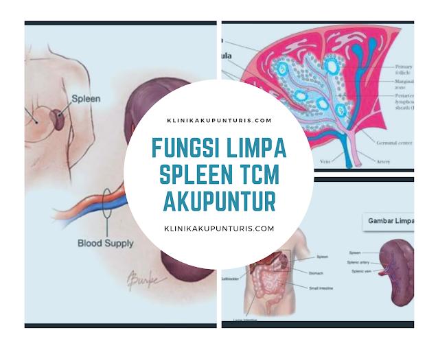 Fungsi Limpa Spleen Dalam TCM Akupuntur