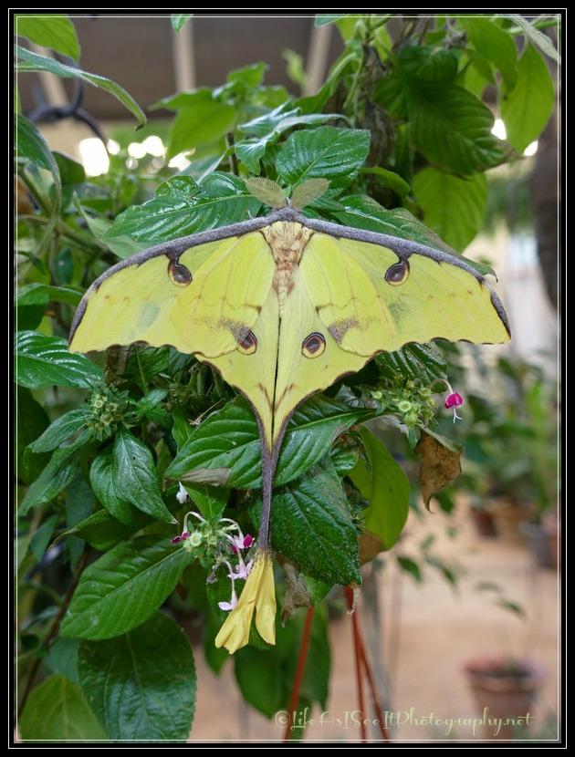 Joseph L. Popp Butterfly Conservatory