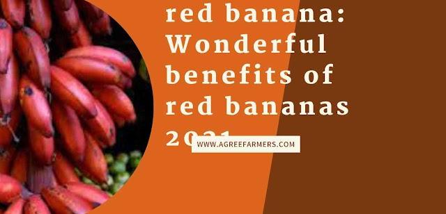 red banana: Wonderful benefits of red bananas 2021