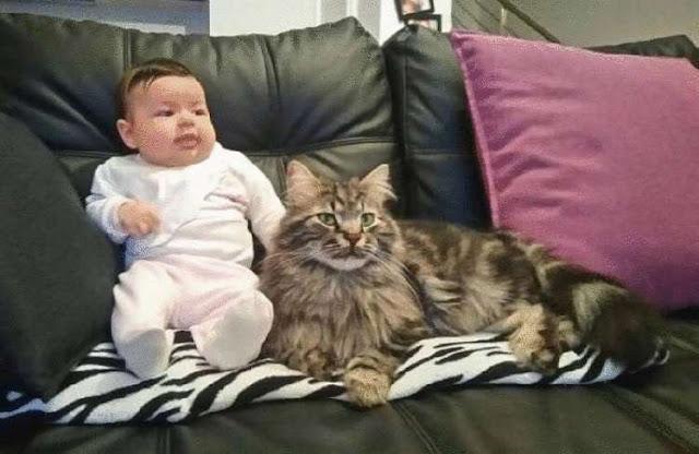 Бездомный кот, прибившийся к женщине-фермерше, стал нянькой для ее ребенка.