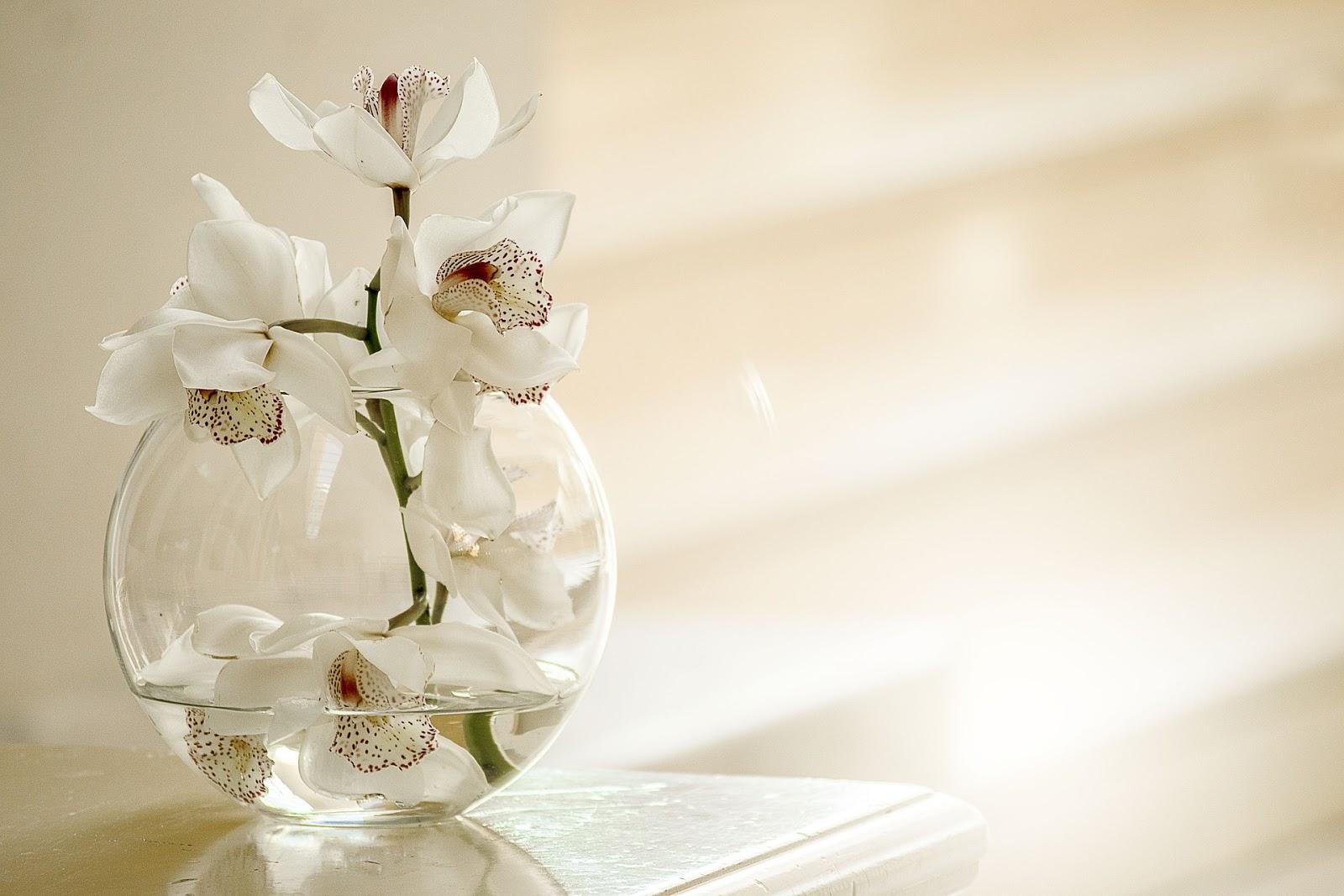 wallpaper gambar bunga anggrek