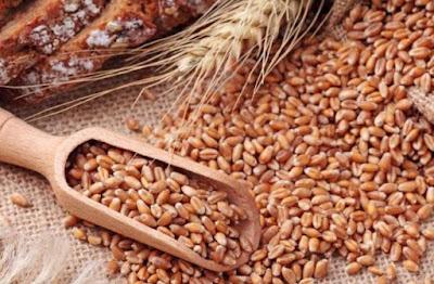 تفسير حلم سنابل القمح الخضراء أو القمح المبلول أو حبوب القمح في المنام