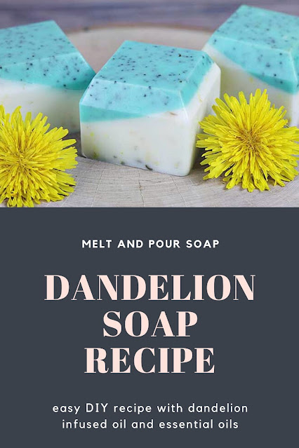 Recipe how to make dandelion soap with dandelion infused oil. This easy DIY soap tutorial uses melt and pour soap base. You get the benefits of dandelion oil plus recipes essential oils. Gets ideas inspiration for a handmade soap for dry skin. Recipes glycerin soap and recipes easy for a homemade bar of soap for hands or body. This exfoliates naturally with poppy seeds.  #soap #dandelion #meltandpour
