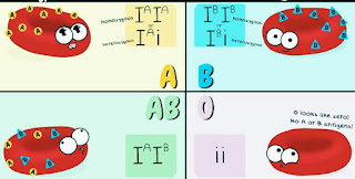 Types of Blood group