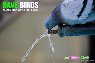 save birds in summer Please give water to birds in summer