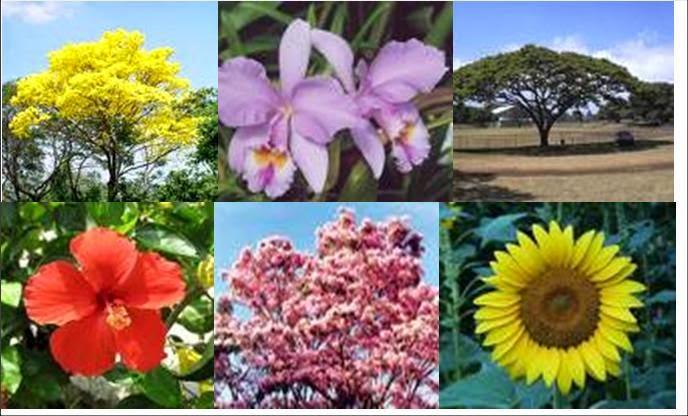 Resultado de imagen para recursos naturales en la flora